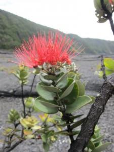 Hawaiian wildlife