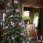 Christmas in Paradase