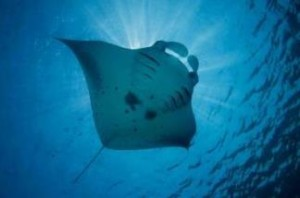 Snorkeling under stingrays is an affordable travel option