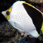 Top 5 Dives in Kona