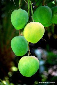 Fresh fruit in Hawaii