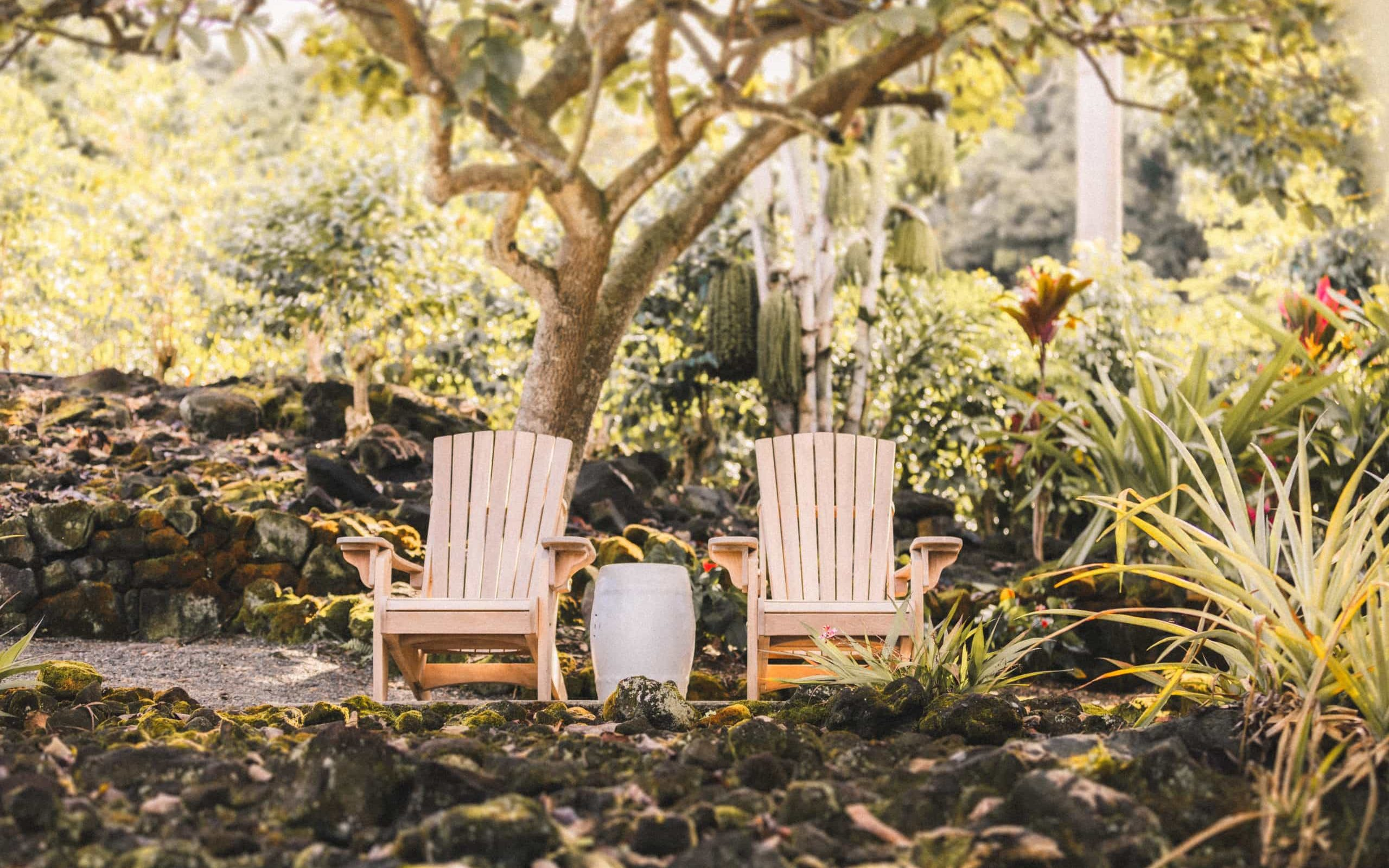 Wooden rocking chairs facing the ocean with tropical fruit tree and pineapple patch