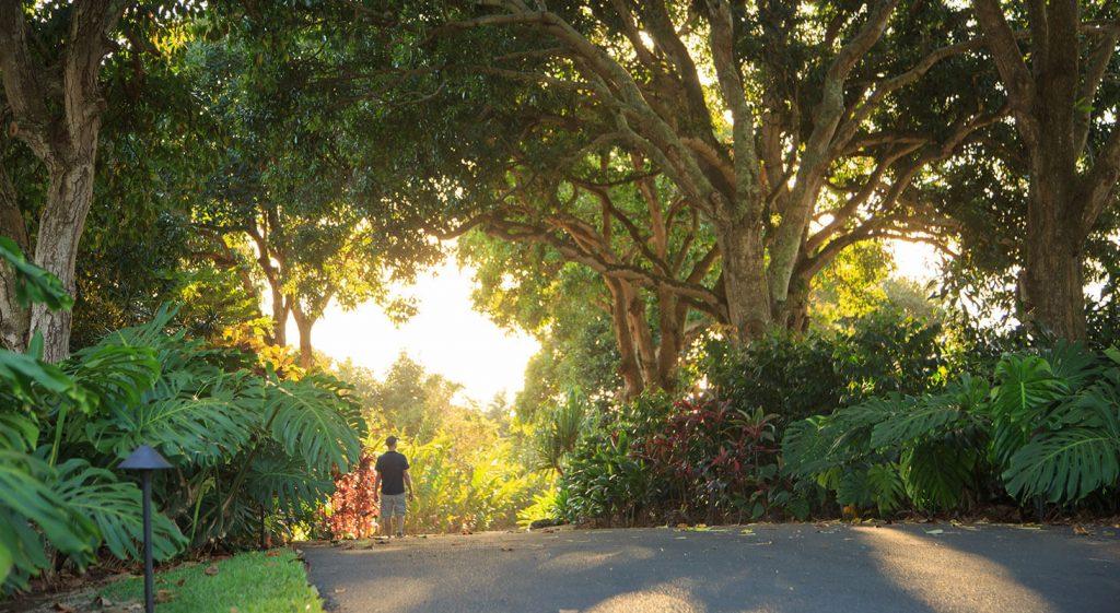 Path through Holualoa Gardens with lush trees and greenery surrounding Big Island estate