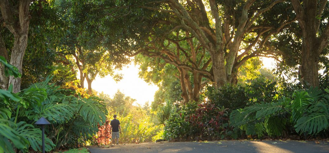 Path through Holualoa Gardens with lush trees and greenery surrounding Big Island estate
