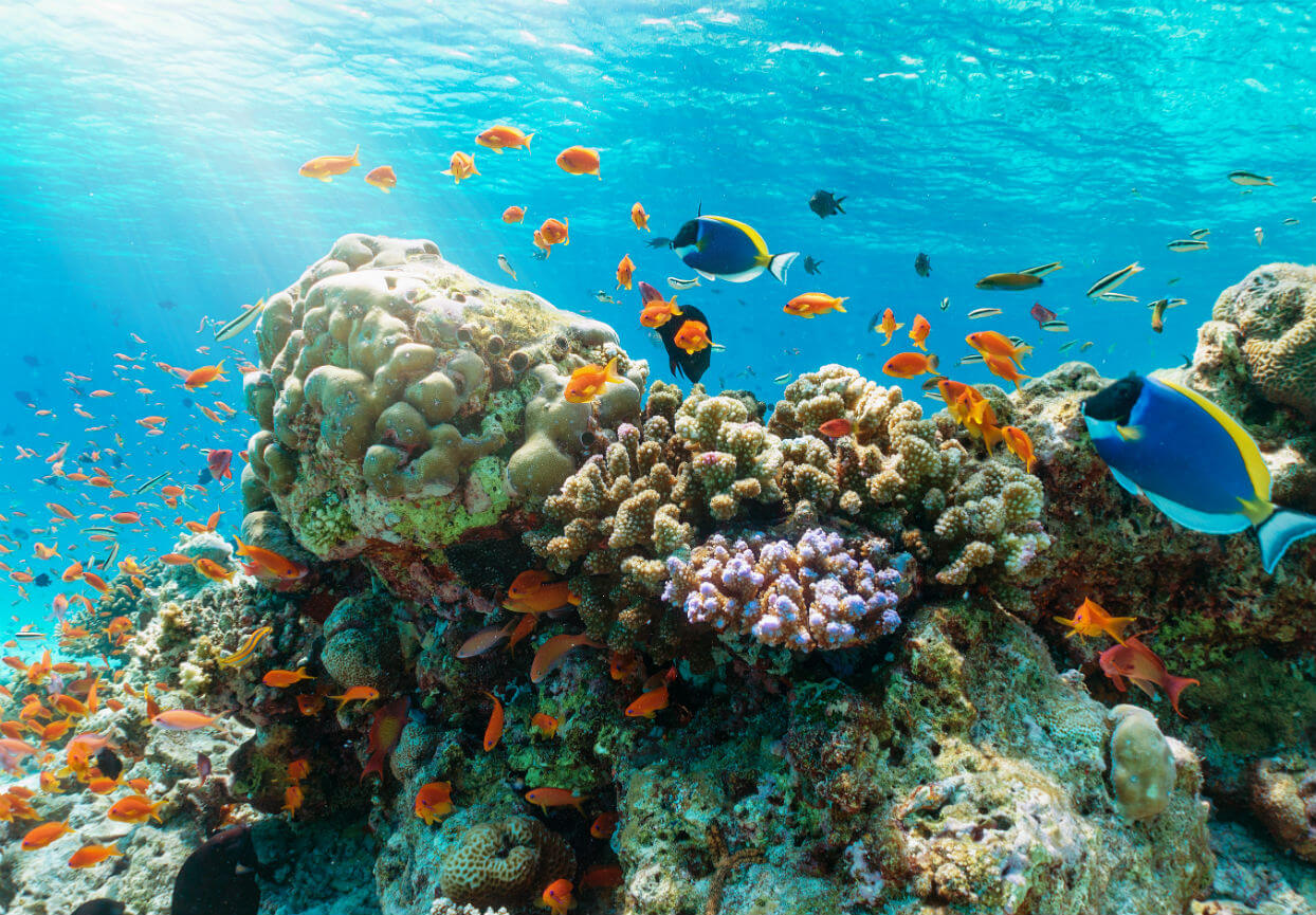 Coral reef surrounded by tropical fish