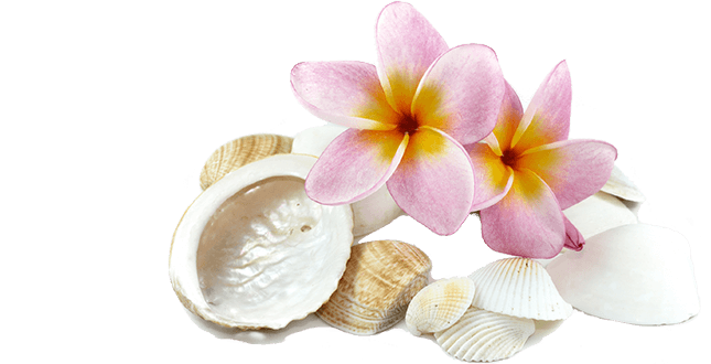 shells with pink flowers