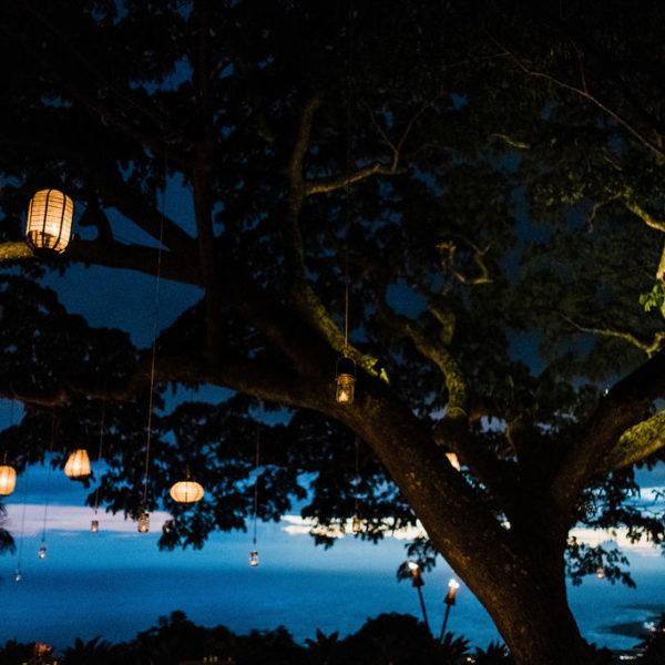 lanterns hanging from tree at dusk