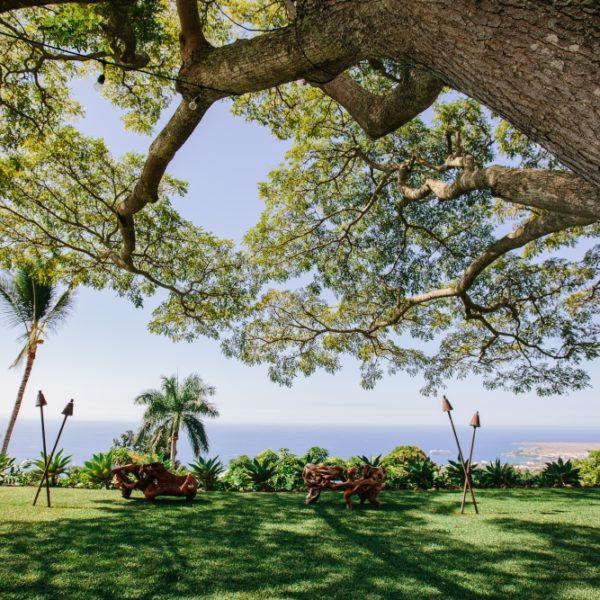Monkey pod tree canopy over Koa benches at romantic wedding venue