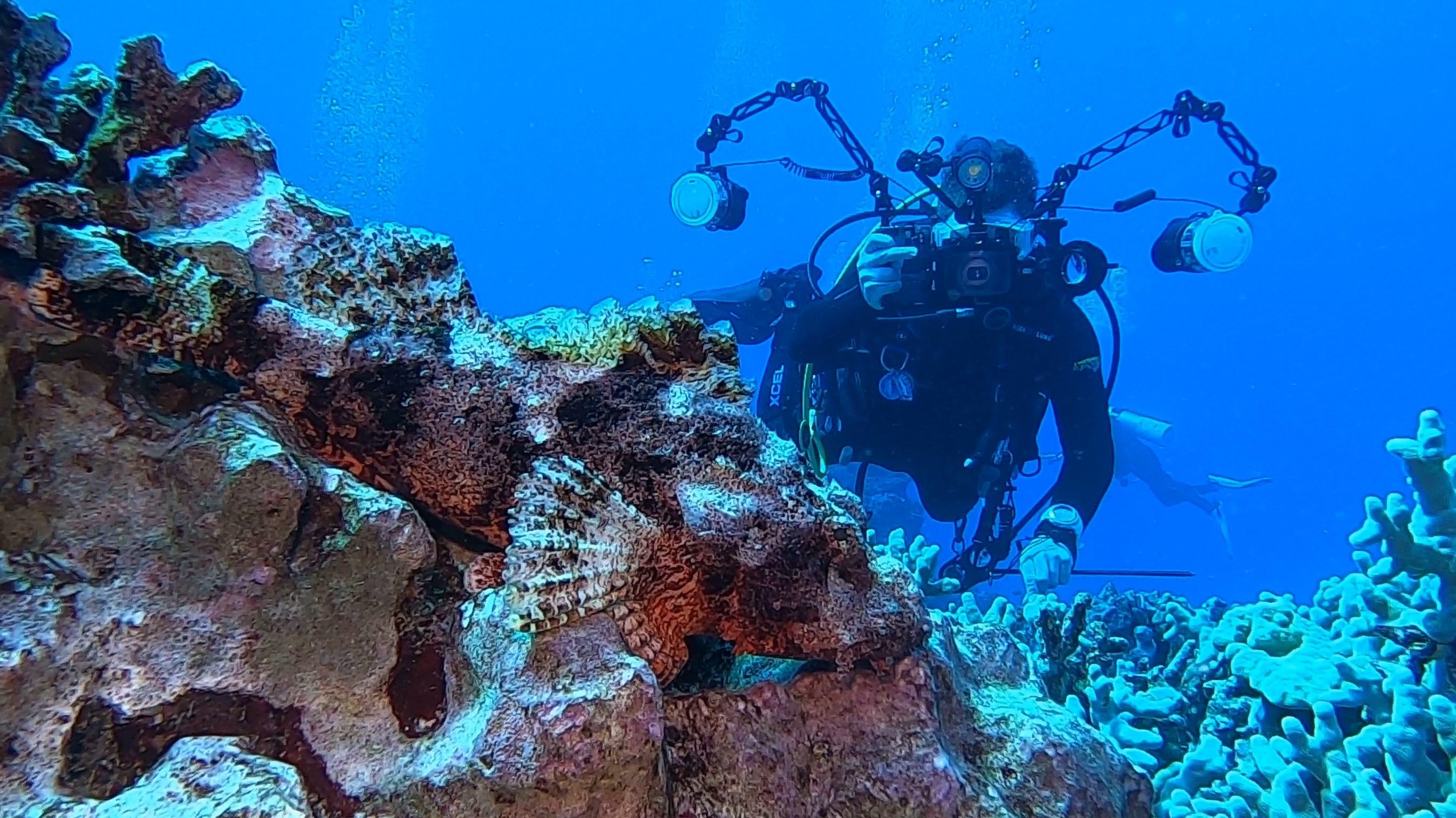 Diver with scorpionfish Hawaii Big Island